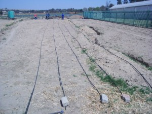 Laying drip irrigation